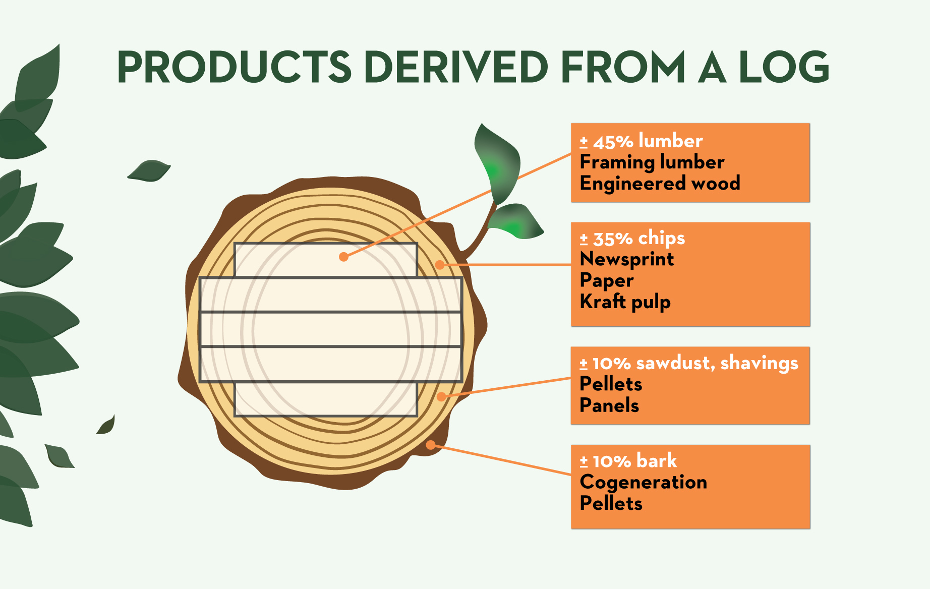Products Derived From A Log